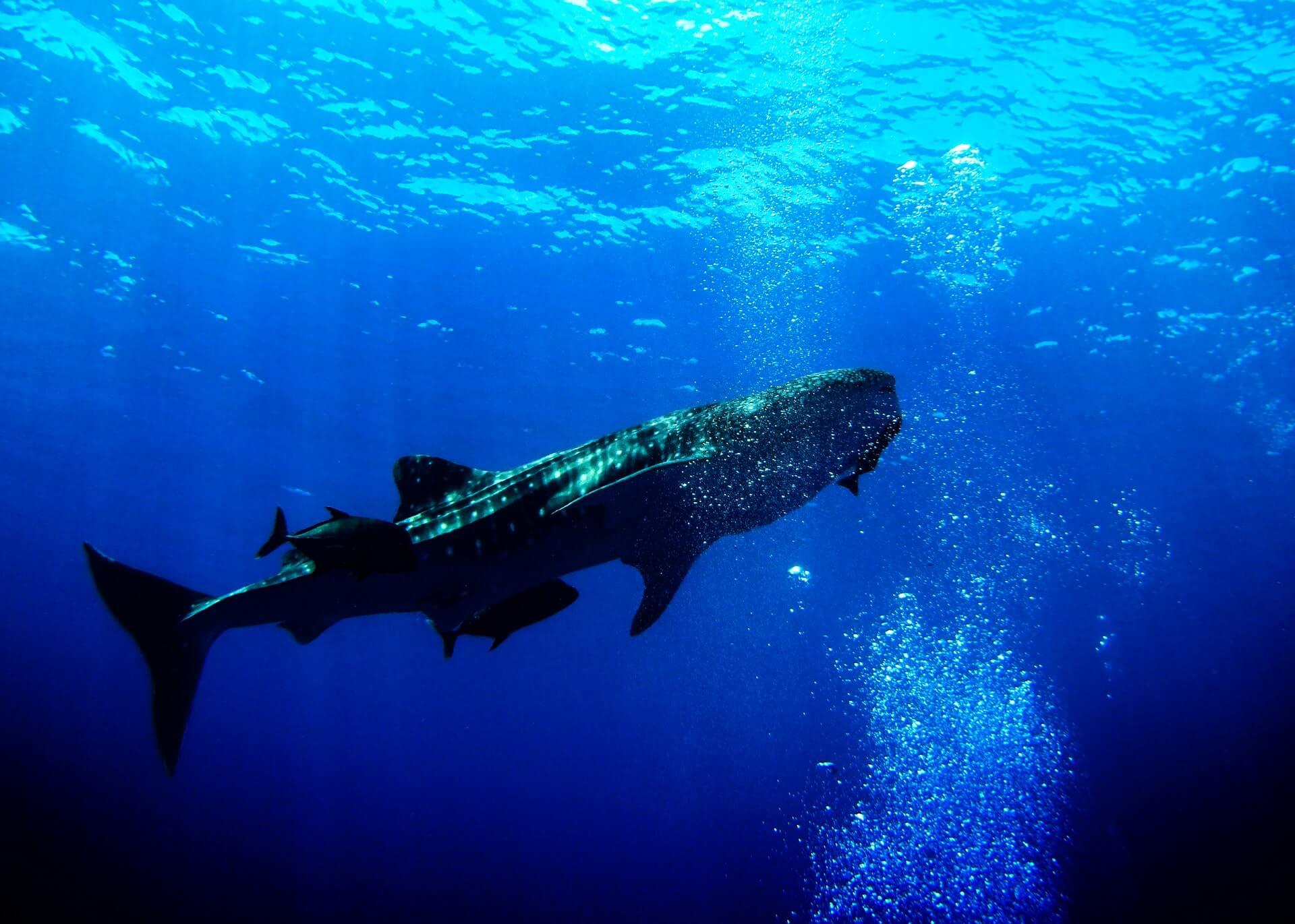 クジライメージ